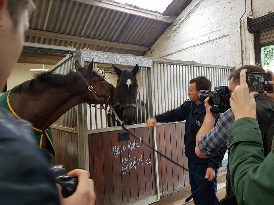 B&W Equine Vets - Retiring police horse Redland reunites with ex-colleague Beaufort