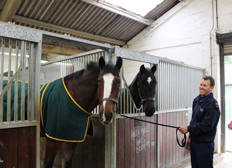 B&W Equine Vets - Retired police horses Redland and Beaufort posing for the camera