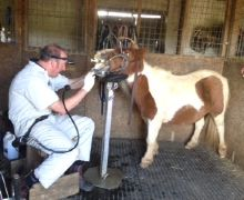 B&W Equine Vets - Equine Dentistry