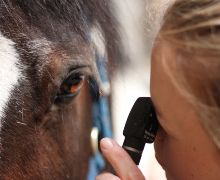 B&W Equine Vets Hospital Referral Services - Opthalmology
