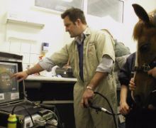 B&W Equine Vets Services - Gastroscopy